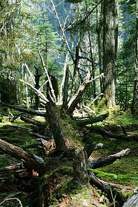 新措原始森林图片