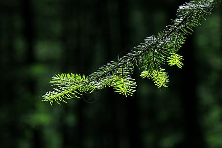 新措的原始森林图片