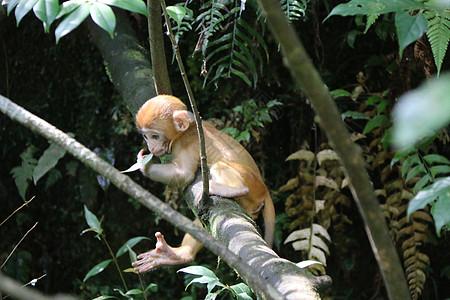 猴子上树图片