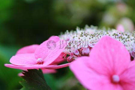 粉色鲜花特写图片