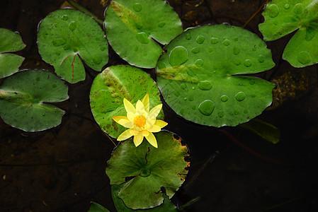 池塘里的荷花图片