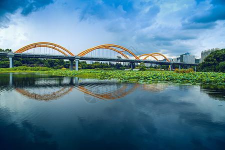 桥下荷塘图片