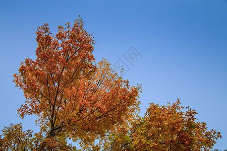 我爱秋天图片