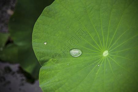 水滴·荷图片