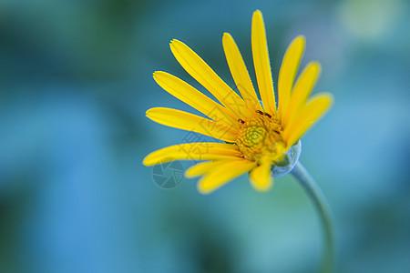 温柔的花图片