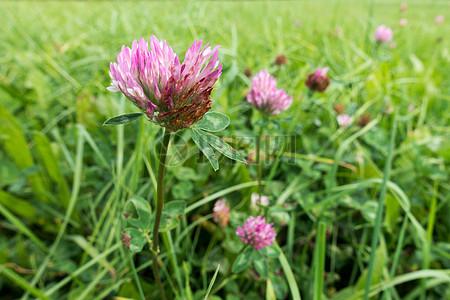 草丛里的粉色鲜花图片