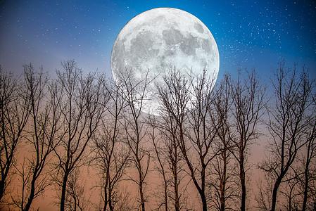 月圆下树林图片