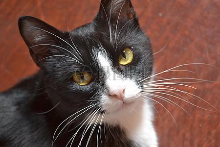 黑猫脸部特写图片