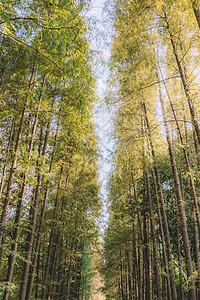 枝繁叶茂蓝天白云树木阳光图片