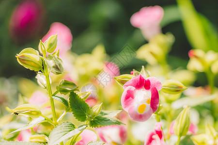 清新自然美绿色植物花草图片