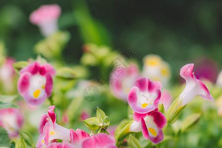 绿色植物花草清新自然环境图片