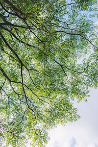树木树干枝繁叶茂仰拍图片