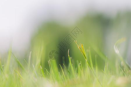 绿意盎然草地背景虚化图片