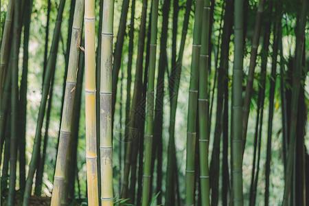 清新绿色植物绿意盎然图片