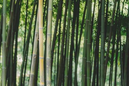 竹林绿叶绿意盎然清新叶子图片