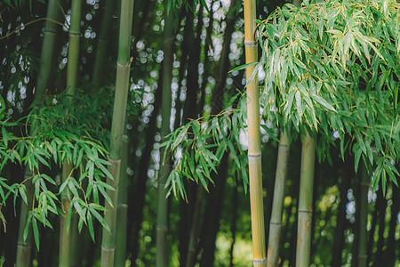 竹林绿叶绿意盎然自然风光图片
