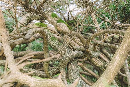 树枝结构枝繁叶茂植物生长图片
