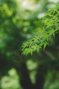 叶子背景虚化绿色环境清新图片