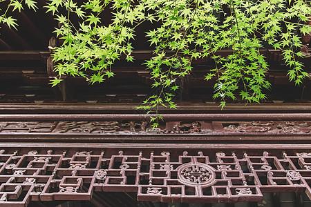 建筑绿色植物环境叶子叶片图片