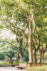 树枝枝繁叶茂植物自然环境图片