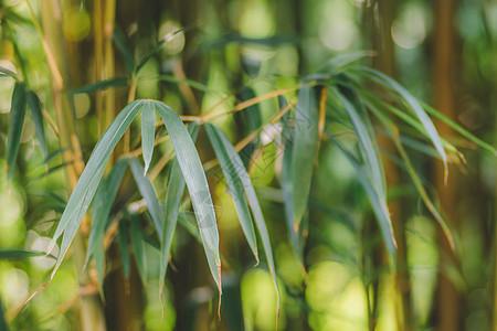 清新背景环境自然美竹叶图片