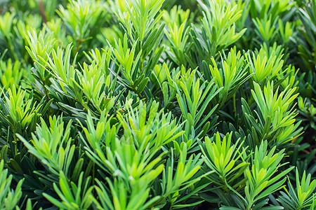 绿叶绿茵绿色背景图片