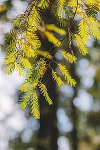 绿色植物光斑背景枝繁叶茂图片