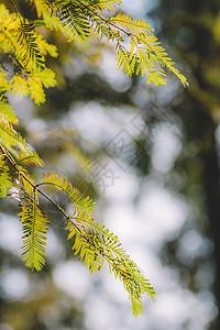 光斑绿色植物背景绿意盎然图片