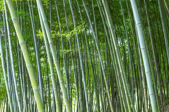 竹子绿色植物背景图片