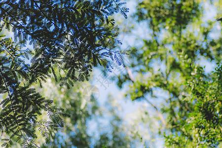 环境植物自然枝繁叶茂清新图片