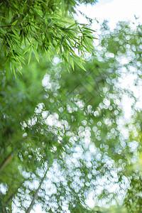 竹叶虚化园林风景图片