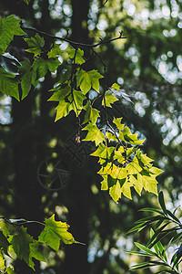 叶子叶片阳光绿色清新图片