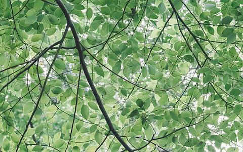 绿色树叶背景植物清新环境图片