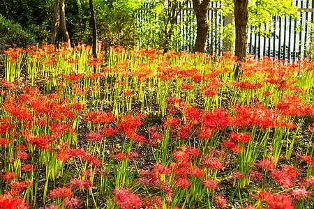 红花阳光树林花园图片