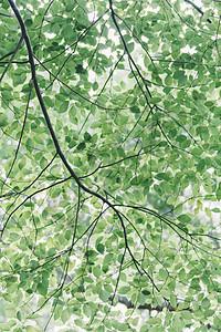 自然绿色背景枝干阳光图片