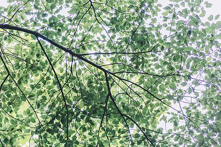 绿色植物环境自然清新图片