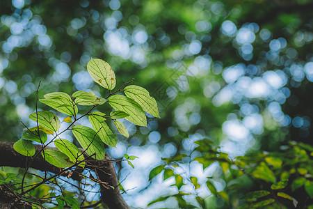 光斑背景虚化绿色叶子图片