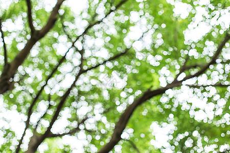树枝树叶虚化背景图片