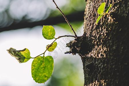 树叶叶片背景环境清新图片