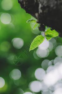 微距虚化环境背景绿色叶片图片