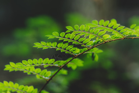 叶片微距结构环境绿意图片