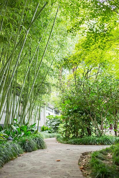 竹林林间小路石路园林图片