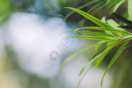 绿色叶片光斑背景虚化图片