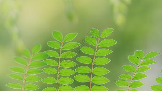 叶片微距结构环境绿意高清图片