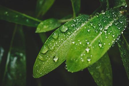 水滴绿叶微距清新环境图片