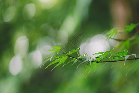 光斑背景绿色植物环境图片