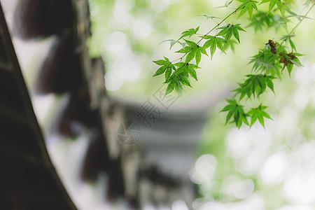 花园环境自然园林绿色树叶图片
