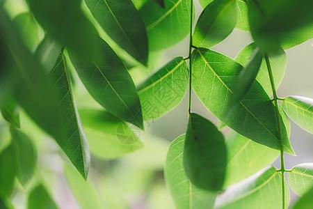 植物绿意微距纹理清新背景图片