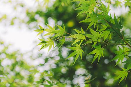 绿色环境光斑阳光清新背景图片
