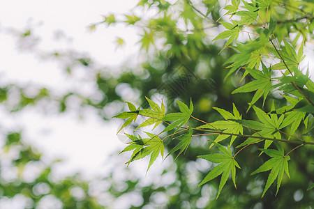 光斑背景绿色树叶清新环境图片